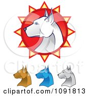 Clipart White Pit Bull Head In Profile Over A Red Burst And Brown Blue And Ivory Heads Below Royalty Free Vector Illustration