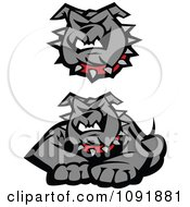 Clipart Gray Bulldog Face And Posed To Pounce Royalty Free Vector Illustration by Chromaco