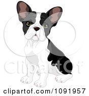 Clipart Cute Black And White Frenchie Bulldog Puppy Sitting Royalty Free Vector Illustration
