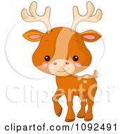 Cute Baby Zoo Deer