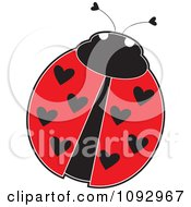 Ladybug With Heart Spots On Its Wings
