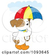 Cute Puppy With Boots And An Umbrella In The Rain