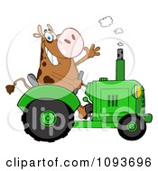 Cow Farmer Waving And Driving A Green Tractor