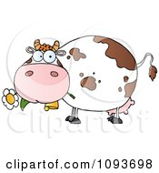 Clipart White And Brown Spotted Cow Eating A Daisy Flower Royalty Free Vector Illustration by Hit Toon