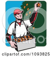 Clipart Retro Male Fruit Picker Picking Oranges From A Tree Royalty Free Vetor Illustration