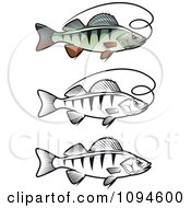 Clipart Perch Fish And Fishing Line Royalty Free Vector Illustration