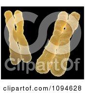 Clipart 3d Orange Human Chromosomes On Black Royalty Free CGI Illustration