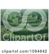 Clipart 3d Hedges Forming A Labyrinth In A Garden Royalty Free CGI Illustration