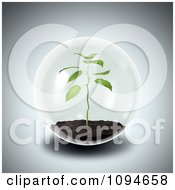 Clipart 3d Seedling Plant Growing In A Sphere Royalty Free CGI Illustration