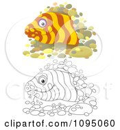 Clipart Outlined And Colored Moray Eels Peeking From Holes Royalty Free Illustration by Alex Bannykh