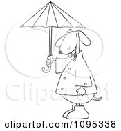 Outlined Dog Standing Upright In Rain Gear And Holding An Umbrella