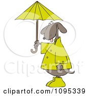 Clipart Dog Standing Upright And Holding An Umbrella Royalty Free Vector Illustration