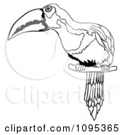 Clipart Outlined Perched Toucan Bird Royalty Free Vector Illustration