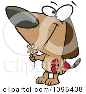 Clipart Cartoon Courting Valentines Day Dog With A Flower And Candy Box Royalty Free Vector Illustration