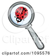 Clipart Magnifying Glass Zooming In On A Ladybug Royalty Free Vector Illustration by Hit Toon
