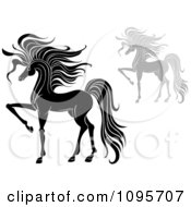 Clipart Elegant Black And White And Gray Prancing Foal Horses Royalty Free Vector Illustration
