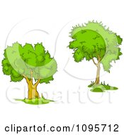 Clipart Two Mature Trees 3 Royalty Free Vector Illustration