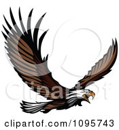 Clipart Wild Bald Eagle Flying With Spread Wings Royalty Free Vector Illustration by Chromaco