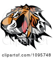 Clipart Angry Tiger Mascot Head Baring Teeth Royalty Free Vector Illustration by Chromaco