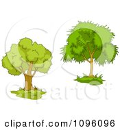 Clipart Two Mature Trees 4 Royalty Free Vector Illustration