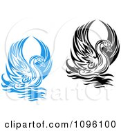 Black And White And Blue Graceful Swans Raising Their Wings