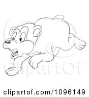 Clipart Outlined Startled Bear Running Royalty Free Vector Illustration