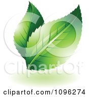 Clipart Two Green Leaves With Flares Royalty Free Vector Illustration