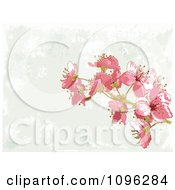 Clipart Background Of Pink Blossoms And Gray Grunge Royalty Free Vector Illustration