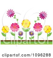 Clipart Colorful Daisies In A Flower Bed Royalty Free Vector Illustration