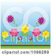 Clipart Colorful Spring Daisy Flowers In A Garden Royalty Free Vector Illustration