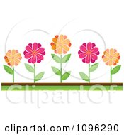 Clipart Pink And Orange Daisies In A Flower Bed Royalty Free Vector Illustration