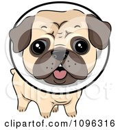 Clipart Cute Pug Dog Wearing A Protective Elizabethan Collar Royalty Free Vector Illustration