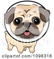 Cute Pug Dog Wearing A Protective Elizabethan Collar