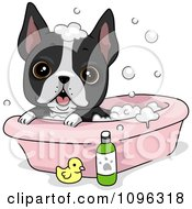 Clipart Cute Boston Terrier Puppy Dog Bathing Royalty Free Vector Illustration