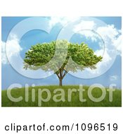 Clipart 3d Lone Tree On A Hill With A Blue Sky And Sunshine Royalty Free CGI Illustration