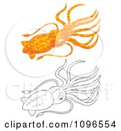 Clipart Orange And Black And White Squid Royalty Free Illustration by Alex Bannykh