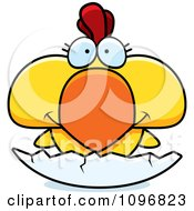 Yellow Rooster Chick In A Shell