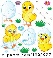 Clipart Hatching Spring Chicks Flowers And Eggs Royalty Free Vector Illustration