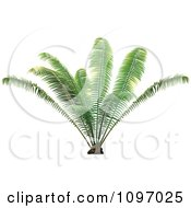 Clipart Lush Green Palm Plant Royalty Free Vector Illustration