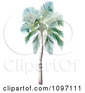Clipart 3d Tropical Palm Tree 1 Royalty Free Vector Illustration