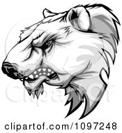 Clipart Aggressive Polar Bear Mascot Head Growling Royalty Free Vector Illustration