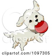 Clipart Happy Golden Retriever Dog Playing With A Flying Disc Royalty Free Vector Illustration by BNP Design Studio