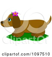 Clipart Happy Dachshund Dog Wearing A Pink Flower In Profile Royalty Free Vector Illustration
