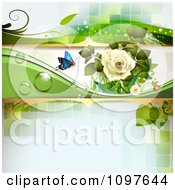 Spring Time Or Wedding Background With A White Rose And A Butterfly On Green