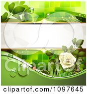 Green Wedding Or Spring Background With A Dewy White Rose And Ladybug