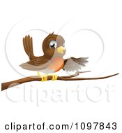 Clipart Cute Robin Bird Perched On A Branch And Pointing With A Wing Royalty Free Vector Illustration by AtStockIllustration