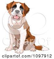 Cute Happy Saint Bernard Dog Sitting