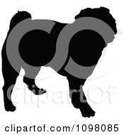 Silhouetted Pug Dog In Profile