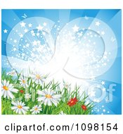 Starry Sunburst Over Spring Or Summer Daisy Flowers In A Meadow