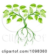 Clipart Green Plant With Leaves And Deep Roots Royalty Free Vector Illustration